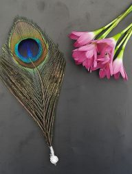 Bookmark-:-Peacock-Feather
